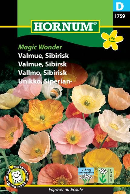 Sibirisk Vallmo - Magic Wonder
