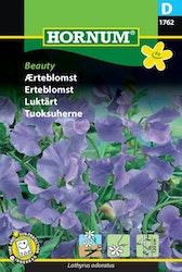 Luktärt - Beauty