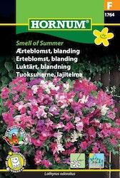 Luktärt mix - Smell of Summer
