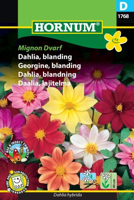 Dahlia mix - Mignon Dvarf