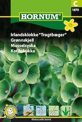 Musselsyska - Hornum frø