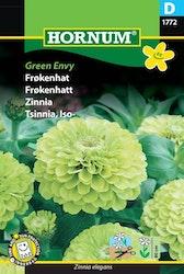 Zinnia - Green Envy