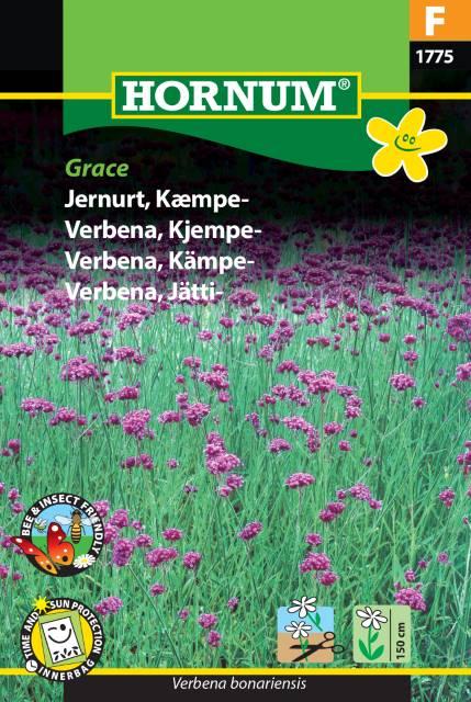 Jätteverbena - Grace