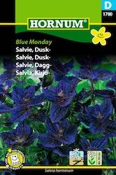Daggsalvia - Blue Monday