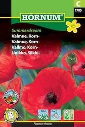 Kornvallmo - Summer Dream