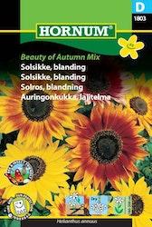 Solros mix - Beauty of Autumn mix