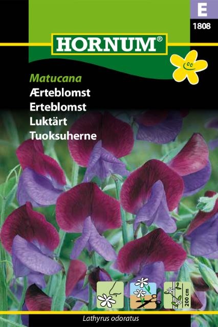 Luktärt - Matucana