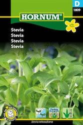 Stevia - Hornum frø