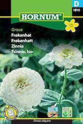 Zinnia - Grace