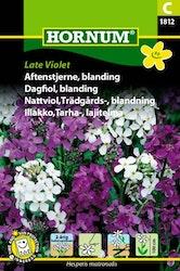 Trädgårdsnattviol mix - Late Violet