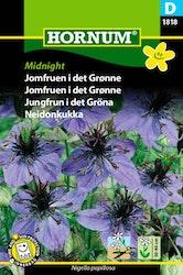Jungfrun i det gröna - Midnight