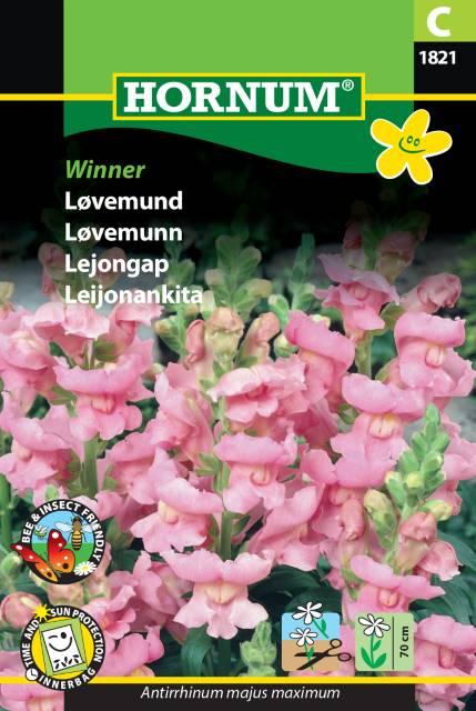Lejongap - Winner