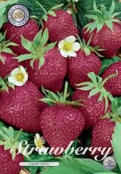 "Jordgubbe ""Cherry Berry"" - Knöl"