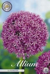 """Jättelök, Allium """"Globemaster"""", 1 st./förpack."""