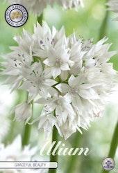 "Papperslök, Allium ""Graceful Beauty"", 5 st./förpack."