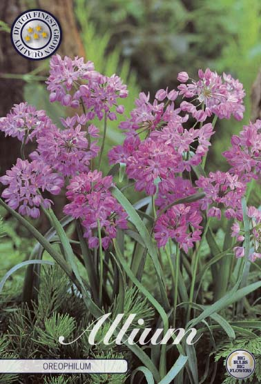 "Rosa Berglök, Allium Oreophilum"", 20 st./förpack."