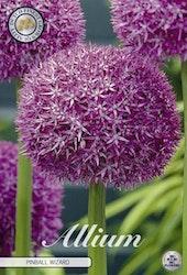 "Allium ""Pinball Wizard"", 1 st./förpack."