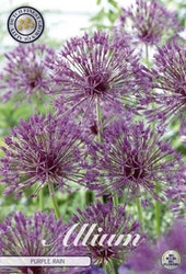 "Allium ""Purple Rain"", 5 st./förpack."
