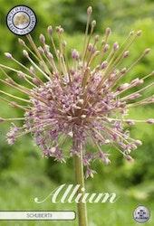"""Allium """"Schubertii"""", 3 st./förpack."""