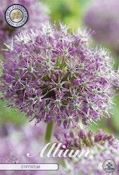 Allium Stipitatum, 2 st./förpack.