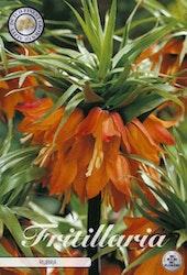"""Kejsarkrona, Fritillaria imp. """"Rubra"""", 1 st./förpack."""