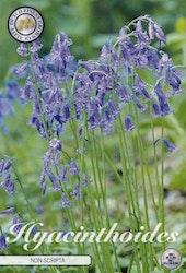 Engelsk klockhyacint, Hyacinthoides Non S. Blue, 10 st./förpack.