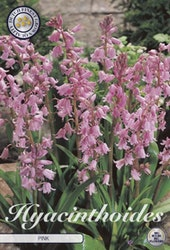 Spansk klockhyacint, Hyacinthoides His. Pink, 10 st./förpack.