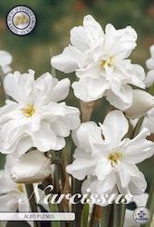 """Fylld Pingstlilja, Narcissus B. """"Alba Plenus"""", 5 st./förpack."""