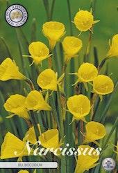 """Narcissus """"Bulboconium"""", 10 st./förpack."""