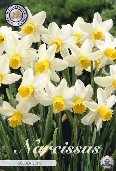 """Narcissus """"Golden Echo"""", 7 st./förpack."""