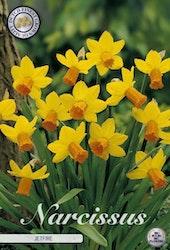 """Narcissus """"Jetfire"""", 7 st./förpack."""