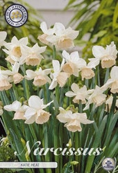 "Narcissus ""Katie Heat"", 7 st./förpack."