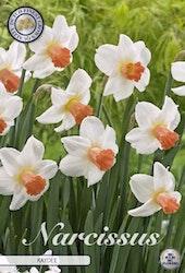 """Narcissus """"Kaydee"""", 5 st./förpack."""