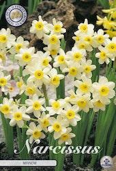 """Narcissus """"Minnow"""", 10 st./förpack."""