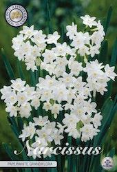 "Narcissus ""Paperwhite Grandiflora"", 5 st./förpack."