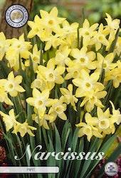 """Narcissus """"Pipit"""", 7 st./förpack."""