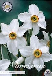 """Narcissus """"Recurvus"""", 5 st./förpack."""