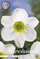 """Narcissus """"sinopel"""", 5 st./förpack."""