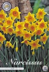 """Narcissus """"Suzy"""", 5 st./förpack."""