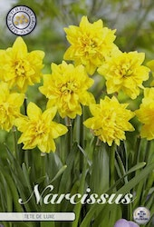 """Narcissus """"Tete a Tete Deluxe"""", 7 st./förpack."""