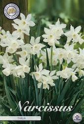 "Narcissus ""Thalia"", 7 st./förpack."
