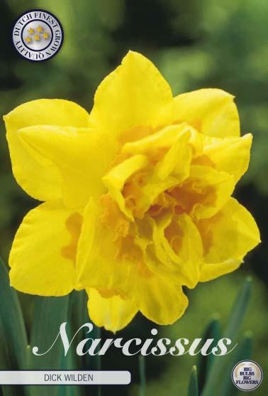 """Narcissus """"Double Dick Wilden"""", 5 st./förpack."""