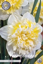 """Narcissus """"Double Ice King"""", 5 st./förpack."""