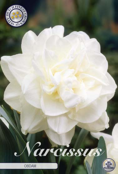 "Narcissus ""Double Obdam"", 5 st./förpack."