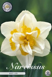 """Narcissus """"Double White Lion"""", 5 st./förpack."""