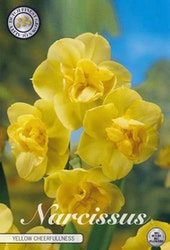 "Narcissus ""Double Yellow Cherfullness"", 5 st./förpack."