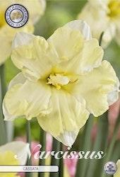 "Narcissus Splitcrown ""Cassata"", 5 st./förpack."