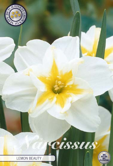 "Narcissus Splitcrown ""Lemon Beauty"", 5 st./förpack."