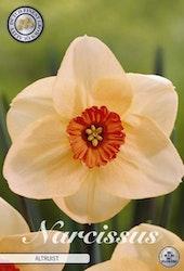 "Narcissus Trumpet ""Altruist"", 5 st./förpack."