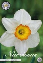 """Narcissus Trumpet """"Barret Browning"""", 5 st./förpack."""